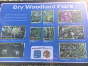 Ballincollig Regional Park, description dry woodland