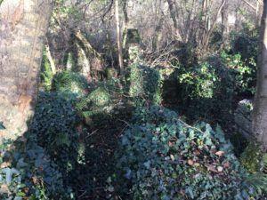 Ballincollig Regional Park, Ruins taken over by nature