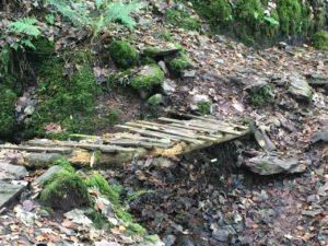 Curragh Woods, hölzerne Brücke