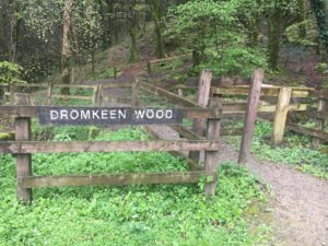 Dromkeen Wood, Seiteneingang