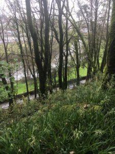 Dromkeen Wood, Blick zum River Bandon