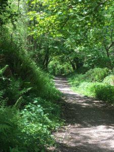 Garretstown Woods, Weg im unteren Teil des Waldes