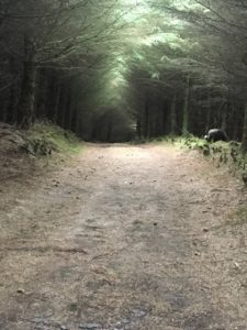 Inchileigh, zauberhafter Wald
