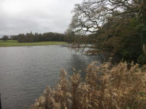 Castlemartyr, lake in hotel area in pedgeon loop