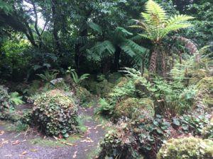 Palms in Fota Arboretum