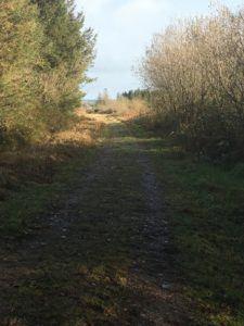 Moanbaun forest, southern trail