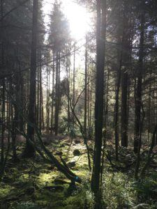 Moanbaun forest, impression with sunlight falling into the forest