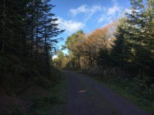 Moanbaun forest, northern trail