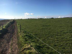 Ballycotton Cliffwalk, along the fields