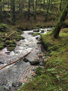 Ballard Waterfall, stream along the hollow