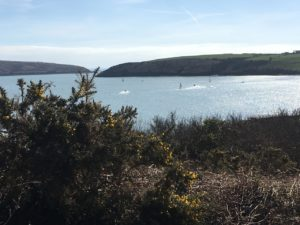Kinsale Castlepark, View to the bay