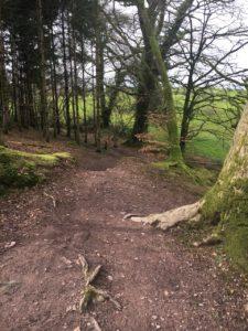 Garryduff, path along the stream