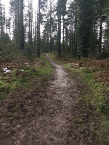 Garryduff, path into the forest