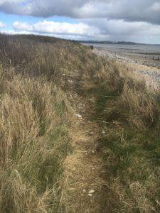 Youghal bird trail