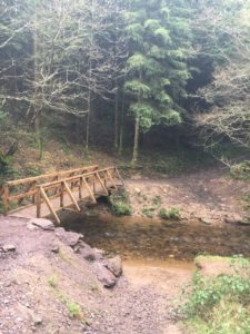 Glesheskin forest, wooden bridge along the trail