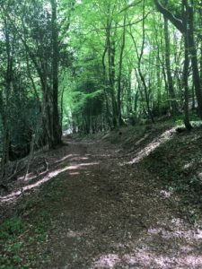 Glanmire, Vienna Woods, trail through the forest