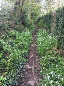 Glanmire, Vienna Woods, trail between the wall and fields