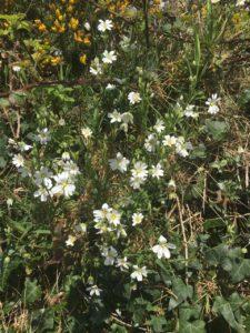 Blackwater LDW, spring is here