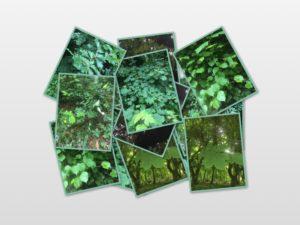 Ballyannan Woods, different tree leaves