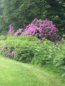 Doneraile Wildlife Park, flowery park