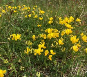 Garretstown woods, spring is here
