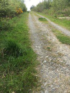 Garretstown woods, walking trail in the upper part