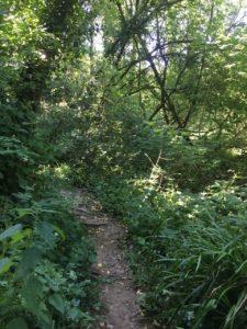 Blackwater River Walk, trail