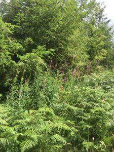 Castleblagh, woodland