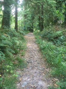 Castleblagh Woods, walking trail uphill
