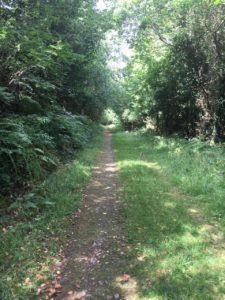 Castleblagh, walking trail almost flat