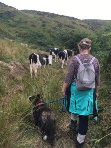 Clara Mountain, with the cows