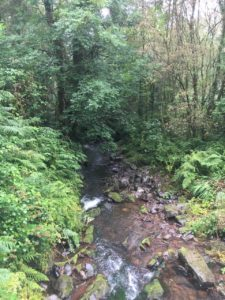 Gleannagear Woods, left part of the bridge